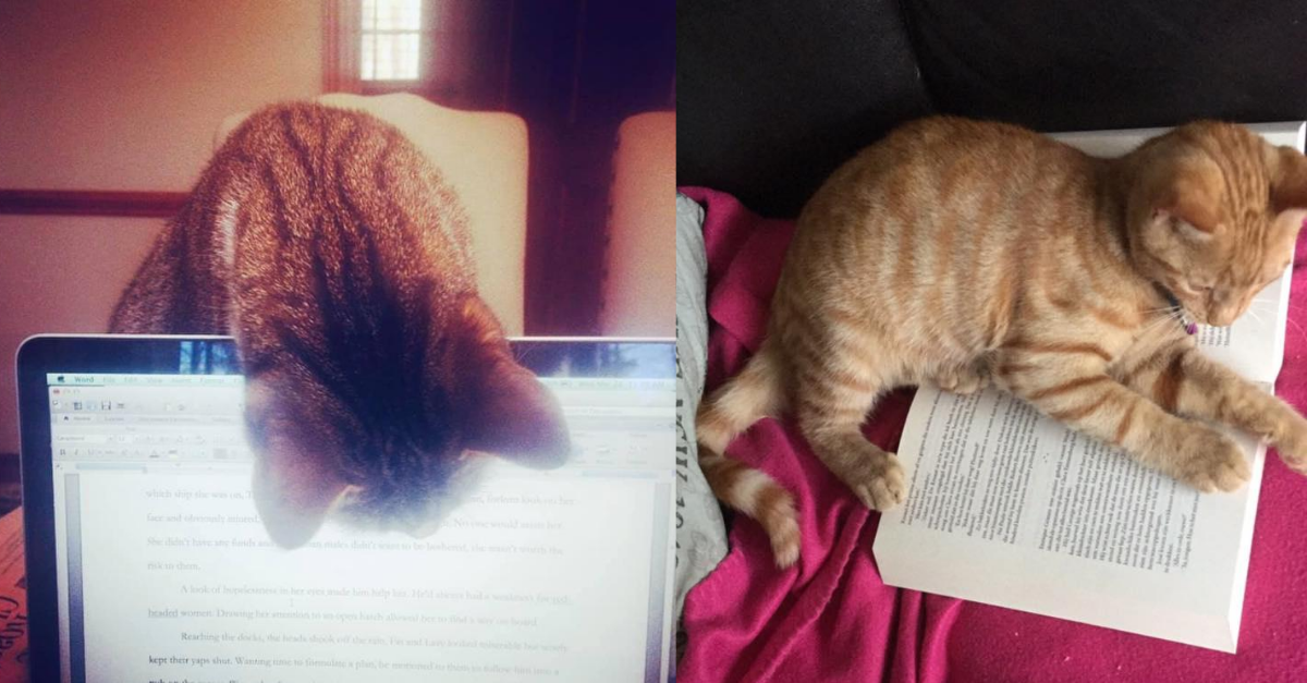 View post titled You tell us: Photos of your literary cats